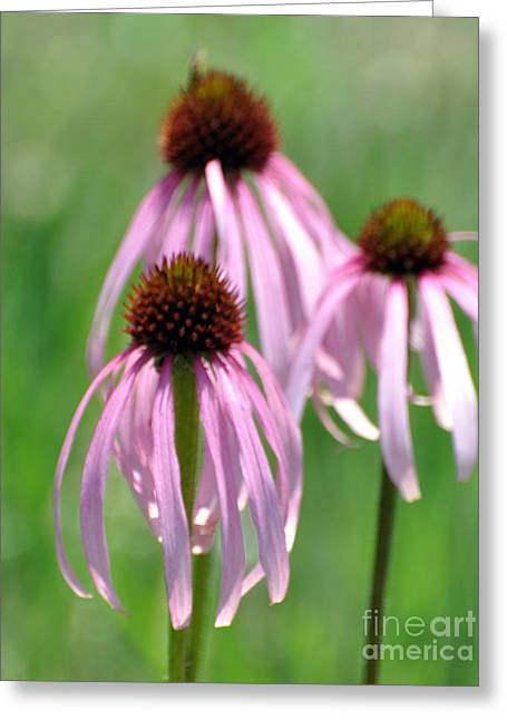 Pale Purple 3 Greeting Card by Marty Koch