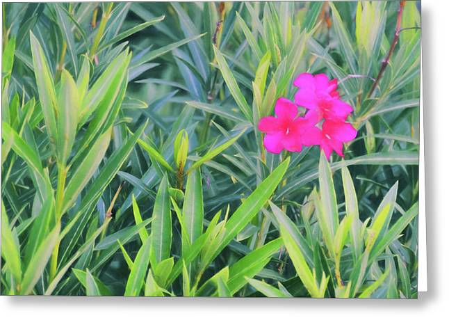Pale Red Blooms Greeting Card by JAMART Photography