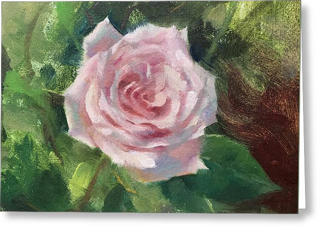 Pale Rose Study Greeting Card by Anna Rose Bain