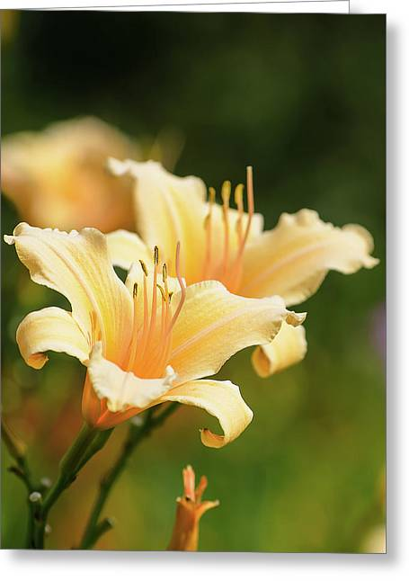 Pale Yellow Greeting Card