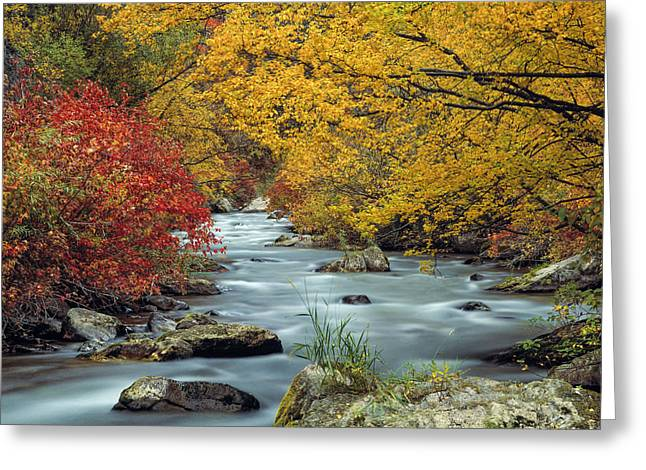 Palisades Creek Greeting Card by Leland D Howard