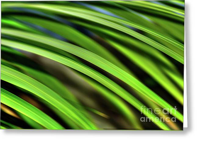 Greeting Card featuring the photograph Palm Abstract By Kaye Menner by Kaye Menner