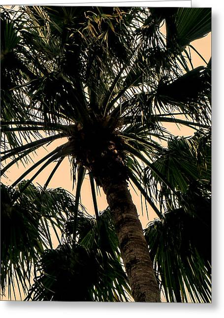 Palm Against The Sky Greeting Card