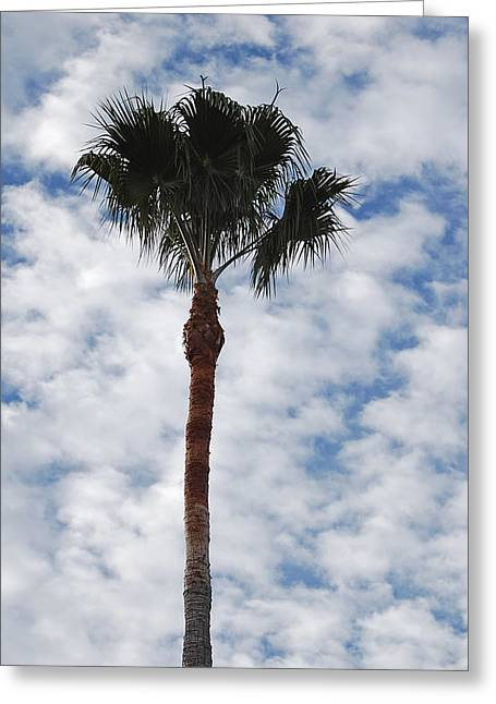 Palm And Clouds Greeting Card by Jean Booth