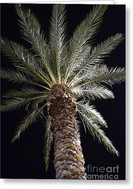 Palm At Night 2 Greeting Card
