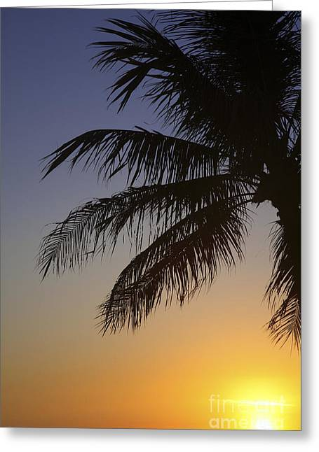 Palm At Sunset Greeting Card by Brandon Tabiolo - Printscapes