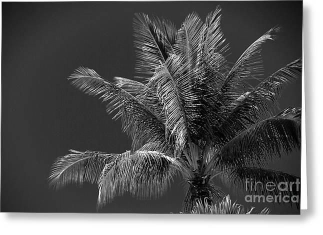 Palm Beauty Monochrome Lahaina Greeting Card by Sharon Mau
