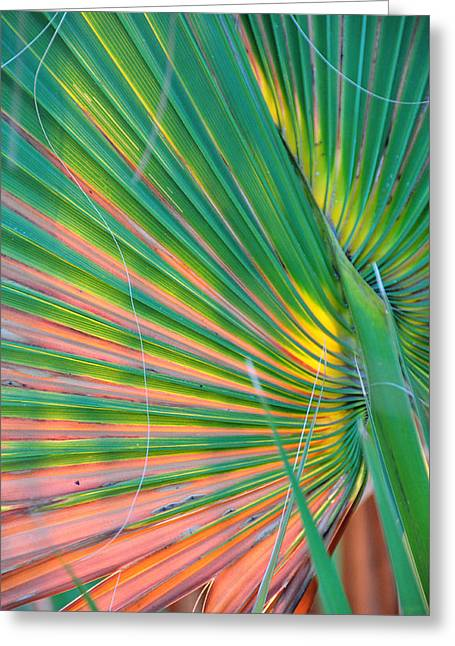 Palm Colors Greeting Card