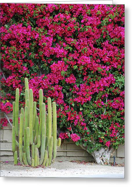 Palm Desert Blooms Greeting Card
