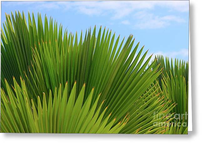 Palm Fans Greeting Card