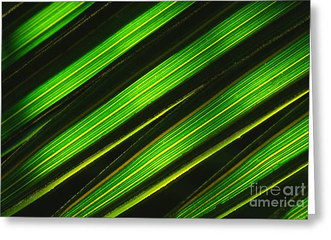 Palm Frond Abstract Greeting Card by Sandra Bronstein