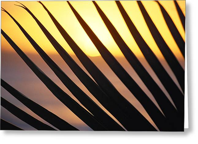 Amazing Sunset Greeting Cards - Palm Frond Detail Greeting Card by Bill Schildge - Printscapes