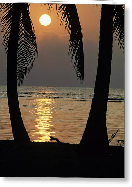 Palm Fronds And Sunset Over Caribbean Greeting Card