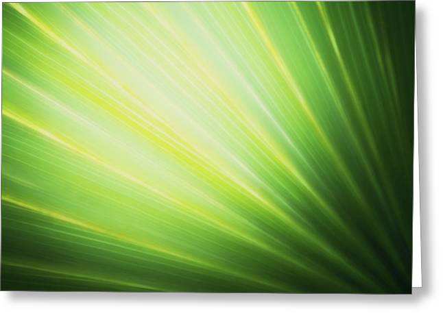 Palm Fronds Greeting Card by Glenn Gemmell