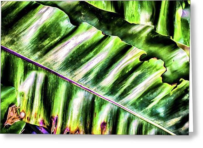 Palm Fronds Up Close Greeting Card