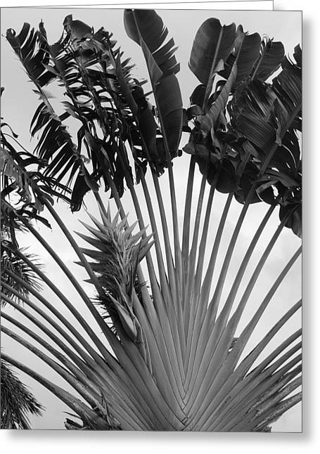 Palm Frons Greeting Card by Rob Hans