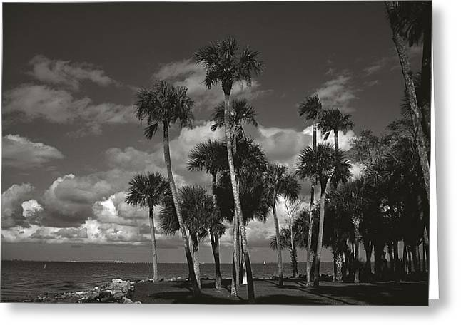 Palm Group In Florida Bw Greeting Card by Susanne Van Hulst