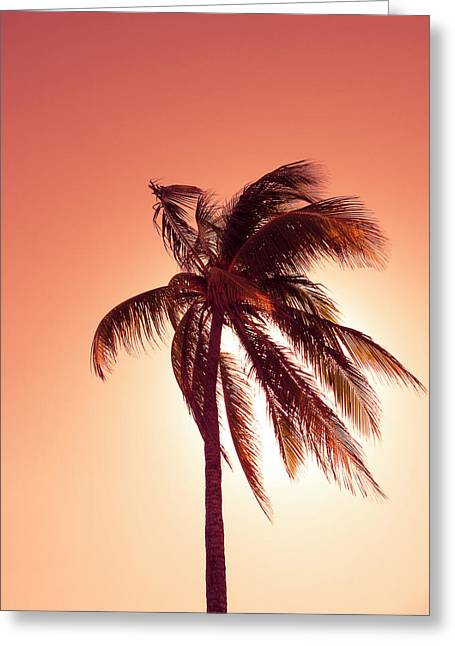 Palm In The Bay Of Pigs, Playa Coco, Cuba Greeting Card by Ralf Martini