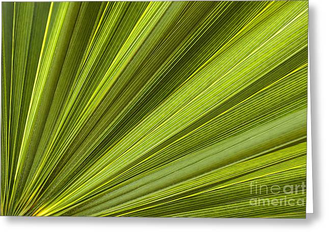 Palm Leaf Abstract Greeting Card