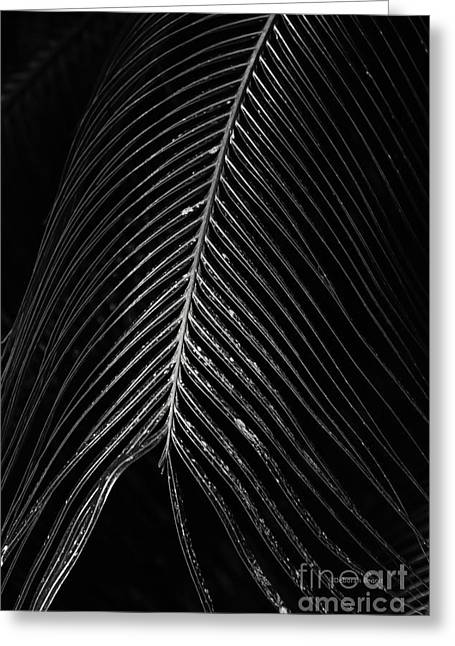 Greeting Card featuring the photograph Palm Leaf by Deborah Benoit