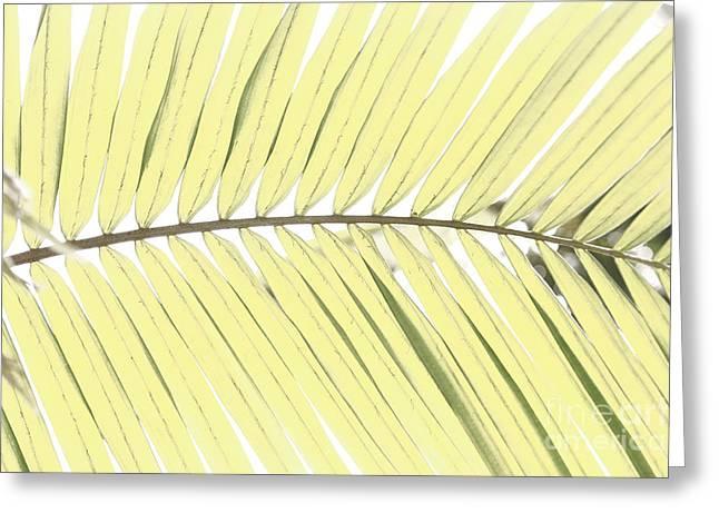 Palm Leaf Greeting Card by Gaspar Avila