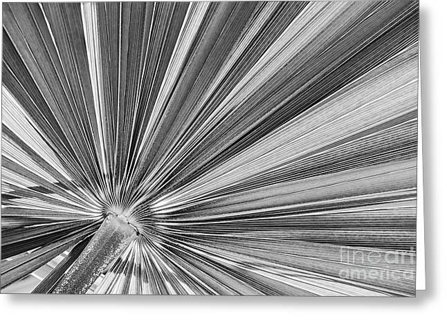 Palm Leaf In Black And White Greeting Card