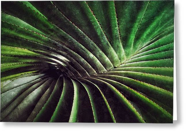Palm Leaf Greeting Card by Kathleen Alhaug