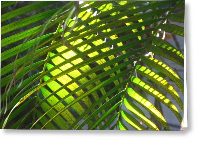 Palm Leaves In Sun Greeting Card