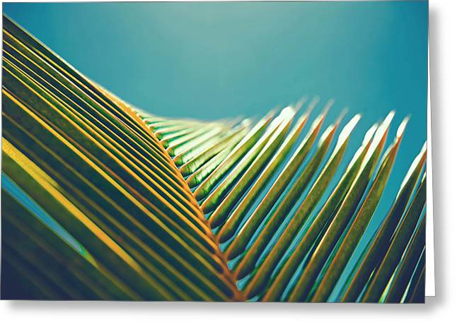 Palm Leaves In The Sun Greeting Card