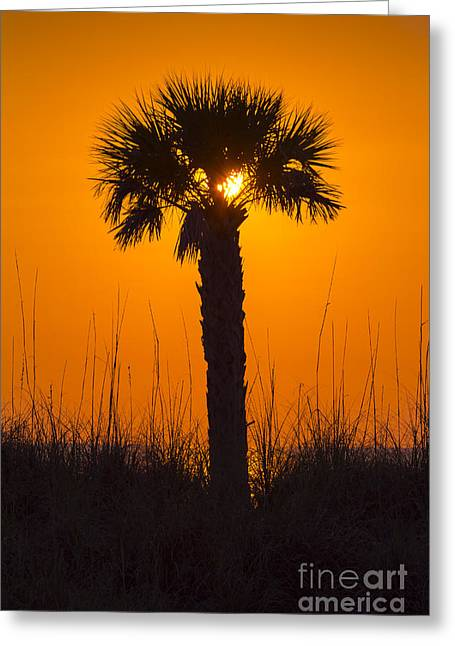 Palm Light Greeting Card by Marvin Spates