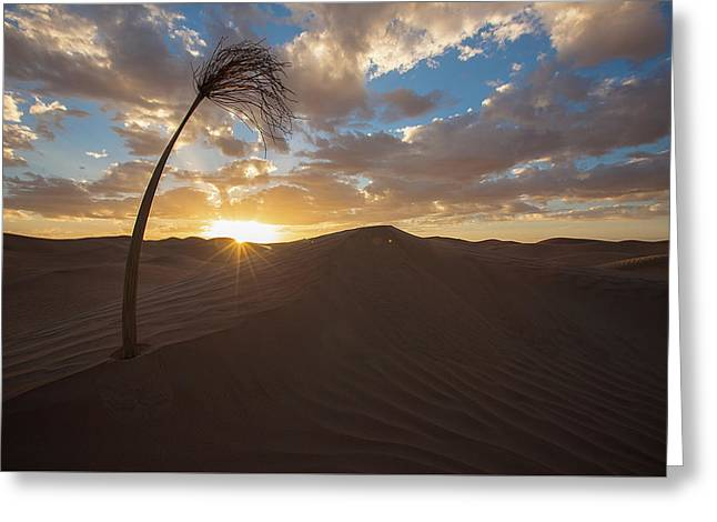 Greeting Card featuring the photograph Palm On Dune by Ibrahim Azaga