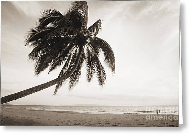 Palm Over Beach Greeting Card by Ron Dahlquist - Printscapes
