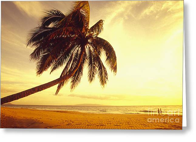 Palm Over The Beach Greeting Card by Ron Dahlquist - Printscapes