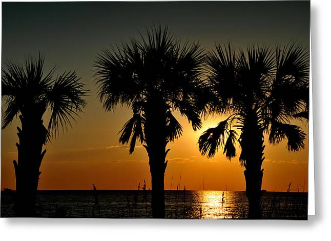 Lyle Huisken Greeting Cards - Palm Silhouette Greeting Card by Lyle  Huisken