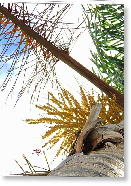 Palm Sky View Greeting Card by Linda Hollis