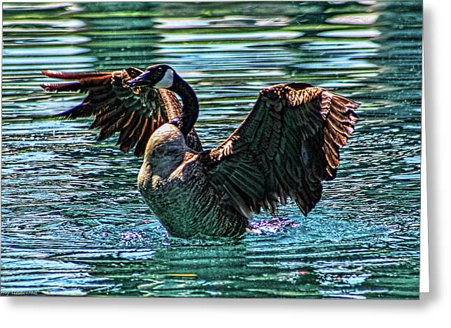 Palm Springs Canadian Goose Greeting Card by Tommy Anderson