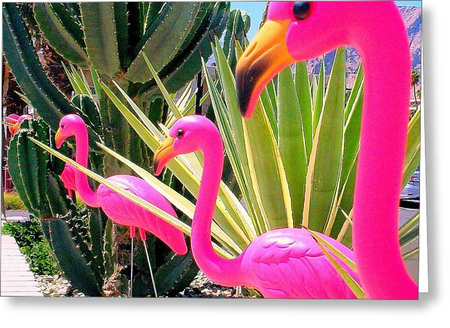 Palm Springs Flamingos 7 Greeting Card