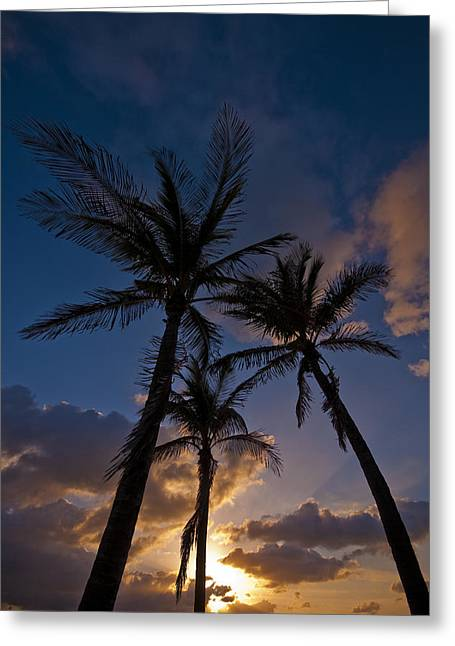 Palm Sunrise Greeting Card