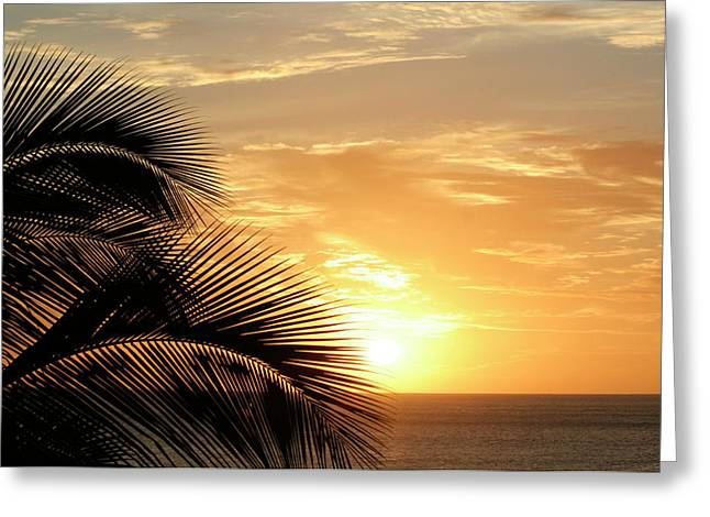 Palm Sunset 2 Greeting Card
