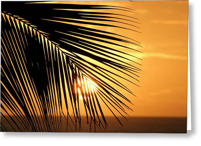 Palm Sunset Greeting Card