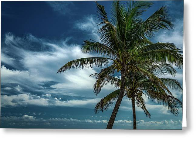 Palm Tree Against The Sky Greeting Card