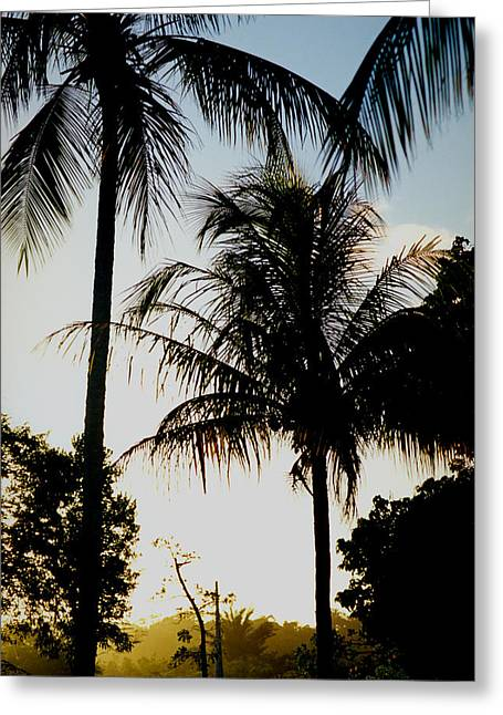 Palm Tree Greeting Card by Amarildo Correa