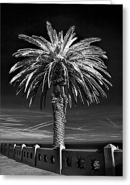 Palm Tree At Point Fermin In Los Angeles California In Black And White Infrared Greeting Card by Randall Nyhof