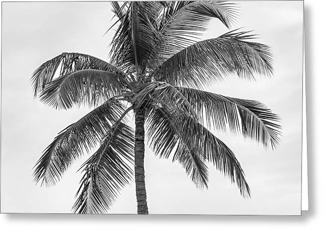 Palm Tree Greeting Card by Elena Elisseeva