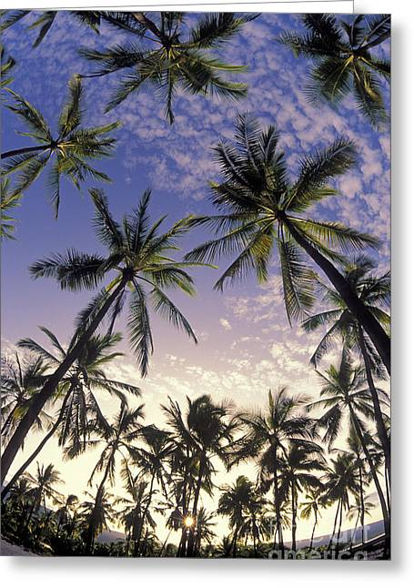 Palm Tree Grove Greeting Card by Greg Vaughn - Printscapes
