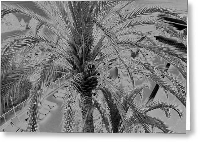 Palm Tree Greeting Card by John Bradburn