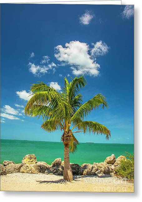 Palm Tree Of Colorful Key West Greeting Card