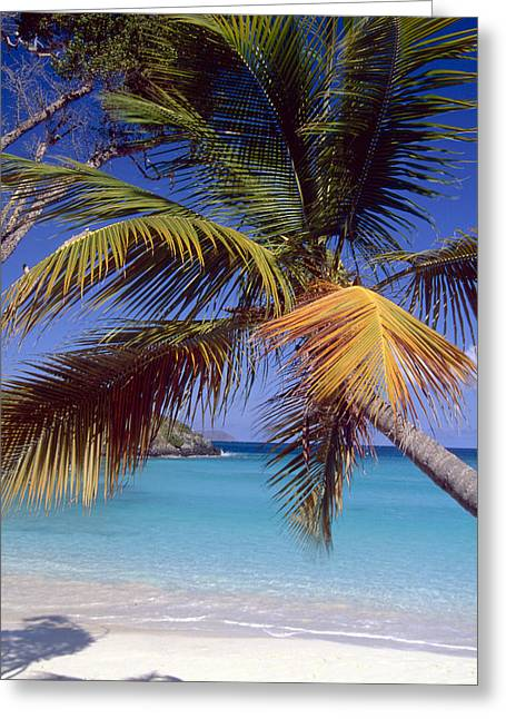 Palm Tree On A Caribbean Beach Greeting Card by George Oze