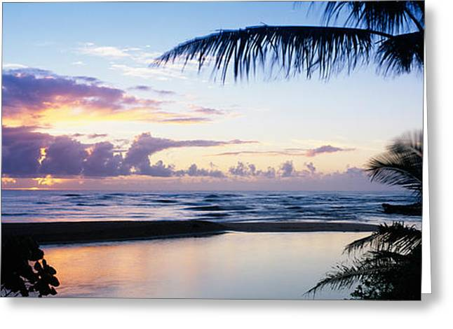 Palm Tree On The Beach, Wailua Bay Greeting Card by Panoramic Images