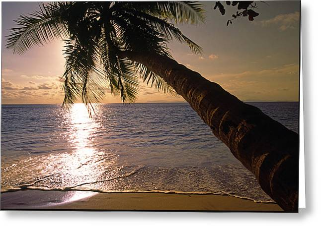 Palm Tree Over The Beach In Costa Rica Greeting Card